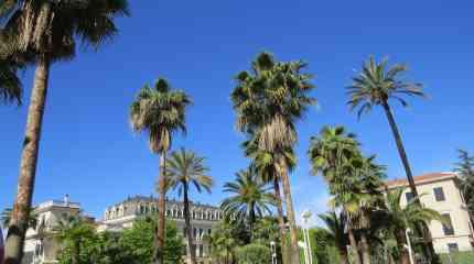 Gli alberi dell'elegante Via Romana