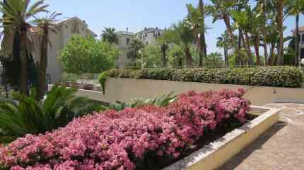 Il giardino condominiale sempre in fiore